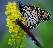 sweet nectar by Éilis  Finnerty Warren