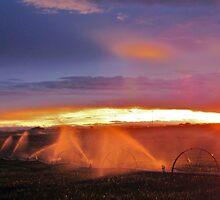 Sunset and Sprinklers by trueblvr