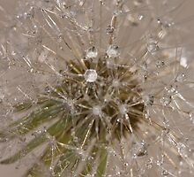 Dandelion Diamonds by Pauline Tims
