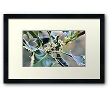 Holly in Flower Framed Print