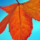 Autumn glo by samhicks
