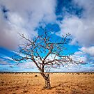 Lonely Tree at Steinfeld - South Australia by AllshotsImaging