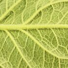 Close up of green leaf by gregorydean
