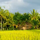 Ubud Rice Field - Bali by wellman