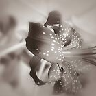 Silver Tones 2 by Danuta Antas