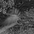 Ozarks stream in Black & White by wsteed04