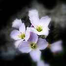 Flower. by Livvy Young
