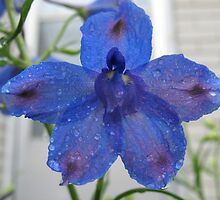 Blue Delphinium by MarianBendeth