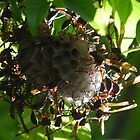 Wasp nest. by Annabella