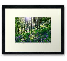 Bluebell Woods Framed Print