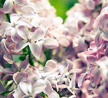 aromatic  by Sarah Burnie