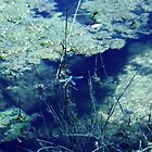 spot the dragonfly by maribel gomez