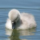 Well, I don't think I'm an ugly duckling by Pauline-W