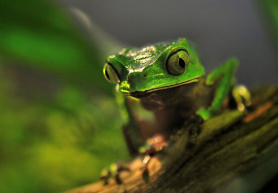 Froggie  by Dennis Stewart