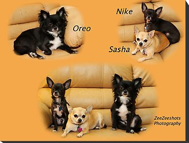 Oreo, Nike and Sasha by ZeeZeeshots