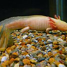 Legged Pink Fish (Salamander) by MaeBelle