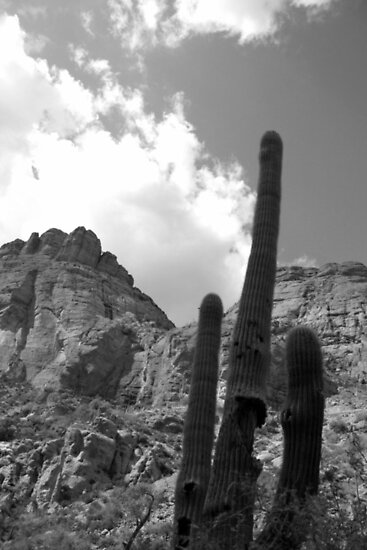 Saguaro and Rock; Arizona by rwhitney22