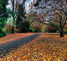Autumn Wonderland | Mt Mount Wilson | NSW | The Blue Mountains | Australia by DavidIori