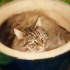 catus by kimbo74