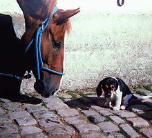 My goodness....how tiny by Heidi Mooney-Hill