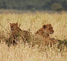 Young Brothers Hanging Out. by CriscoPhotos