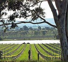 St Huberts Winery by Phillip Bruggink