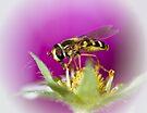 Hoverflies love strawberries too by inkedsandra