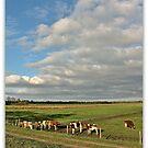 Roodbont Vee (Cattle) in Meadow by Aheroy