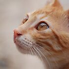 Cat in Crete by SweetLemon