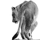 Lioness by Jessica Dzupina
