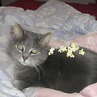 Popcorn Cat by Niagaralights