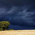 Lone Tree by Leanne Robson