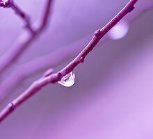 Lilac Zen  by jayneeldred