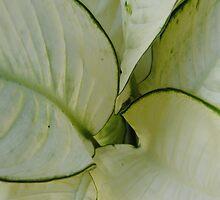 dark white by pablotguerrero
