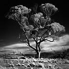 Dark tree by Alexander Meysztowicz-Howen
