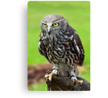 Green Eyes - barking owl Canvas Print