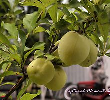 little green apples by snappylens