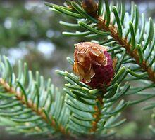 New Pine by vigor