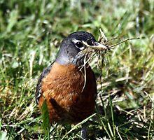 Prepairing the Nest by Dave & Trena Puckett