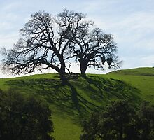 Large Tree among the rolling hills in Spring by N2Digital