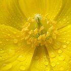 Rain Upon The Poppy by Lewkeisthename