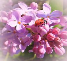 Lilac Dreams by Eugenio