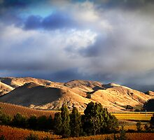 Wither Hills Autumn Afternoon by Robyn Carter