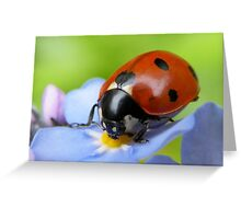 Pretty Lady Greeting Card