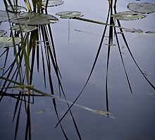 water plants by Bill vander Sluys