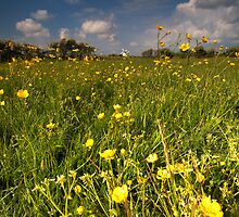 Buttercup Meadow  by Jeanie