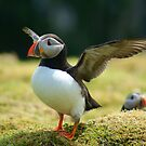 Puffin I by Samuel Fletcher