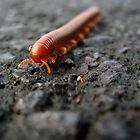 Millipede, Hana by Sherry Lynn Crawford