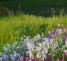 Spring Phlox by Michael  Dreese