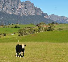 photoj Tas Country Landscape by photoj